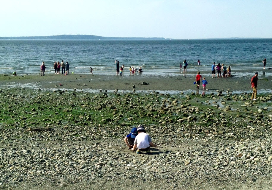 Low tide at Carkeek Park. Photo by Elisa Murray