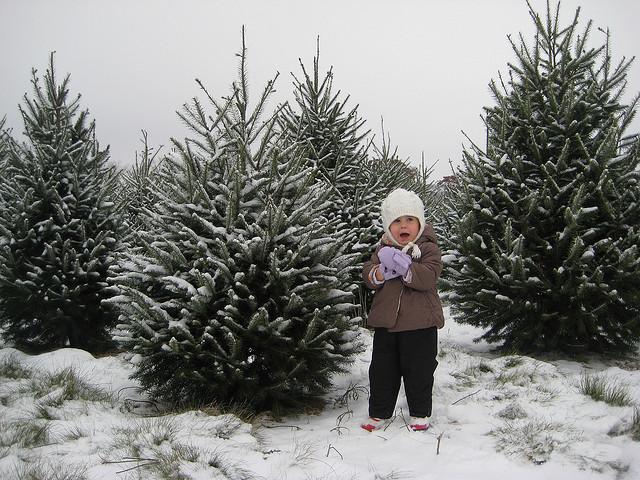 U Cut Christmas Trees.Christmas Tree Hacks A Puget Sound Guide To Cutting The