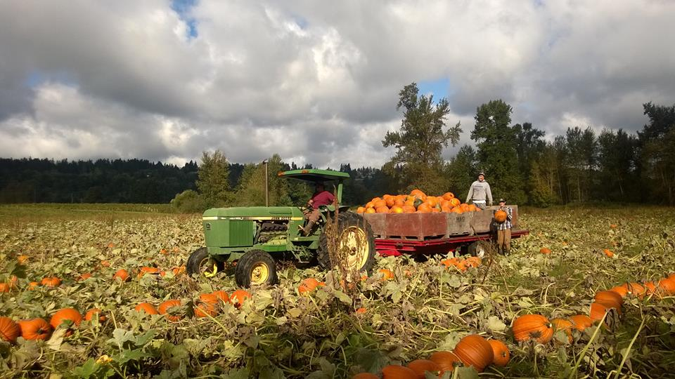 Thanksgiving Corn Farm: 10 Terrific Pumpkin Patches Around The South Sound And