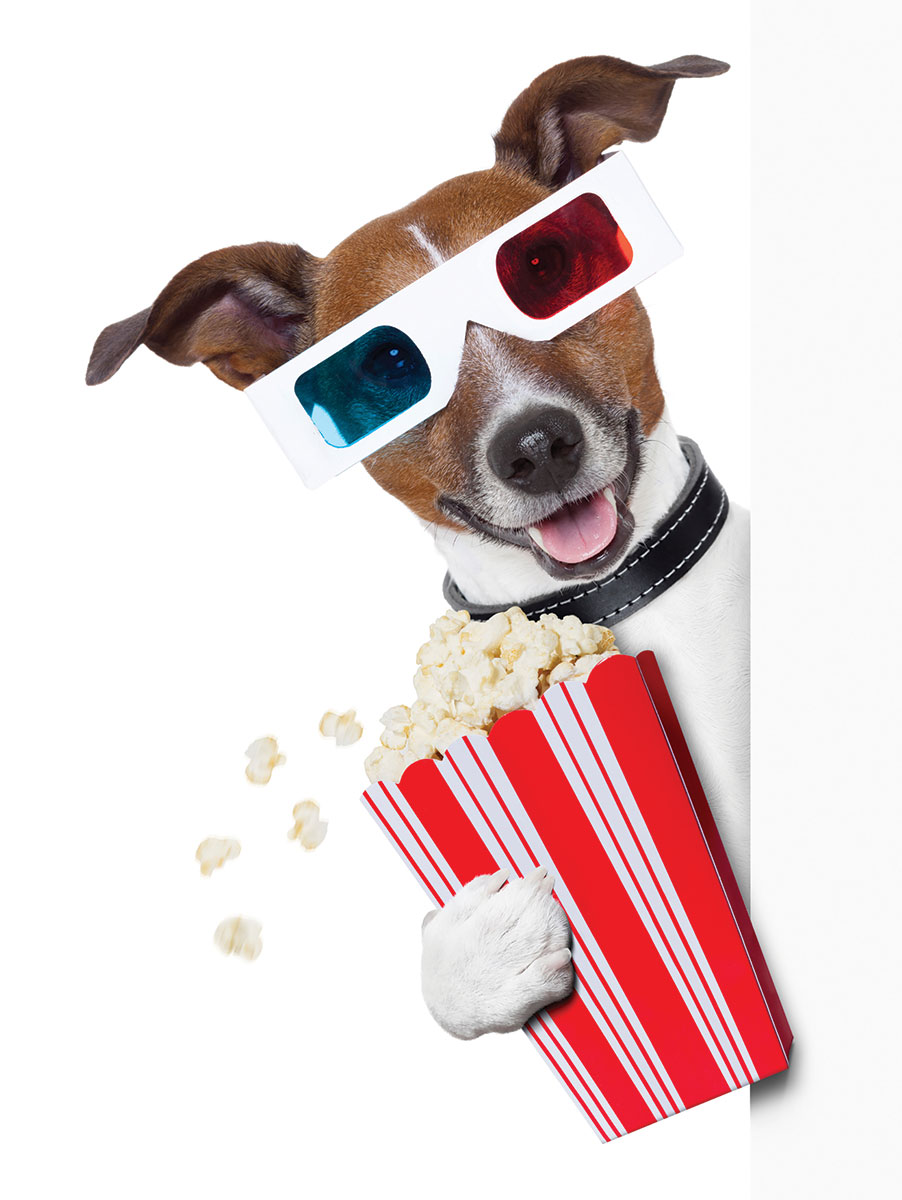 The Dog Movies