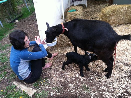 Urban farmer Sarah Moore, with her goats