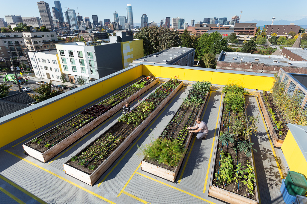 The rooftop garden at Capitol Hill Urban Cohousing