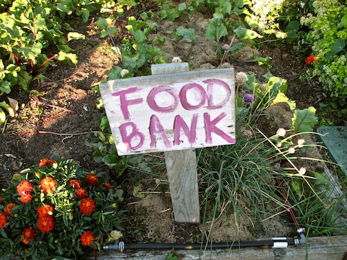 Giving garden for food bank donation