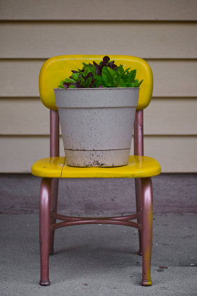 Lettuce in small container garden on chair