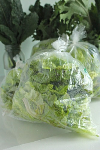 Lettuce grown for food bank donation