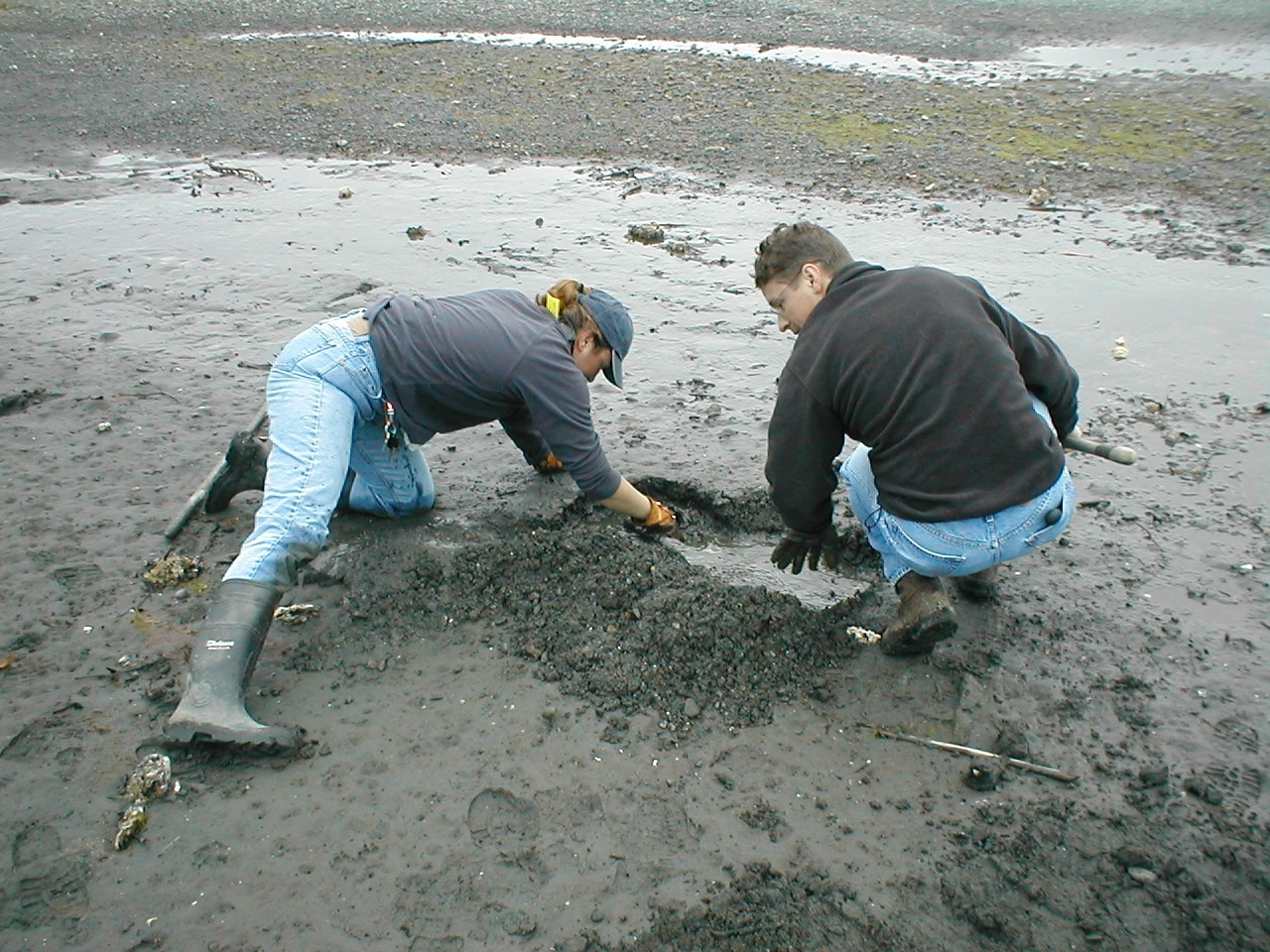family digging clams on the beach