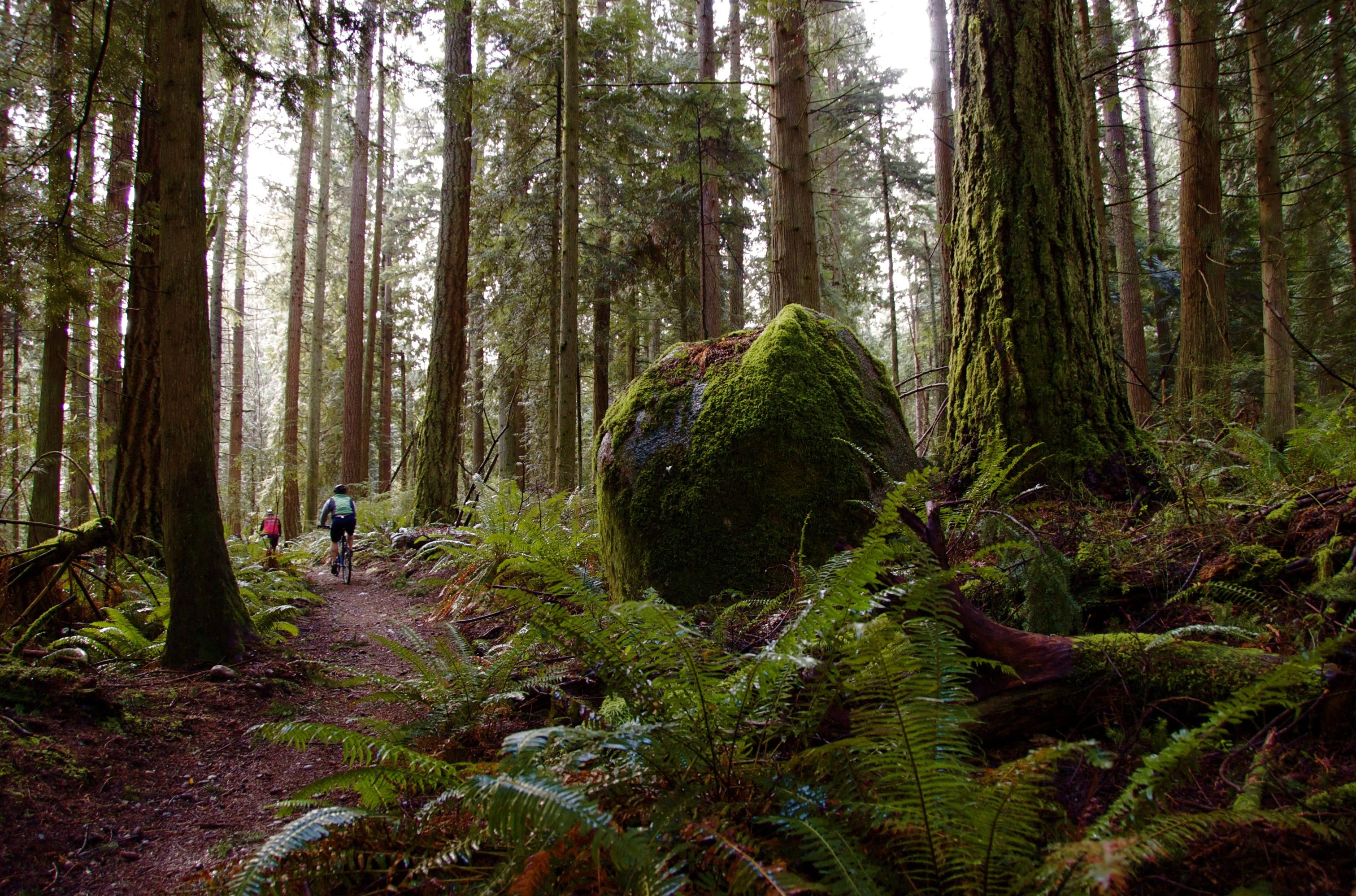 Kid Friendly Hikes Near Tacoma Wa