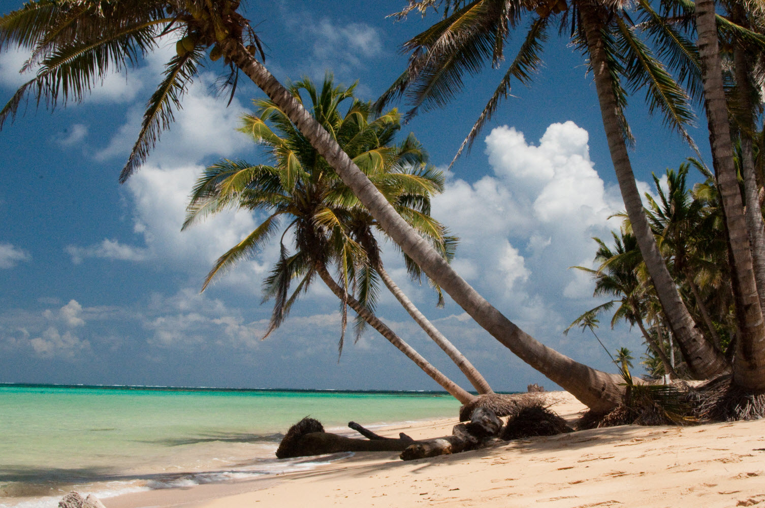 palm trees on a sunny beach at otto beach on little corn island in nicaragua