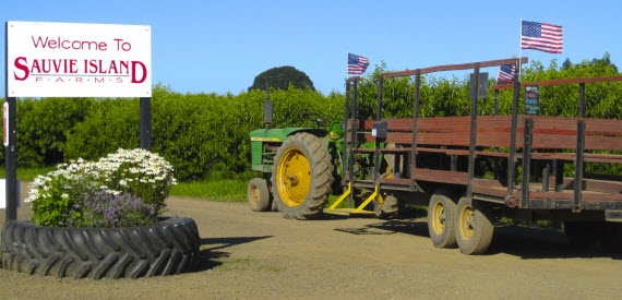 Sauvie Island Farms