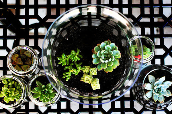 Making homemade terrariums with kids by Eighteen25