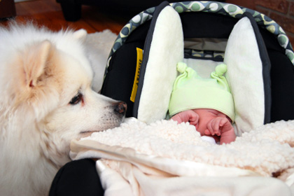Introducing your pet to the new baby