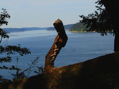 Point Defiance Park seattle.Roamer