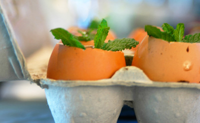 Egg shell plant starters by Imagine Childhood