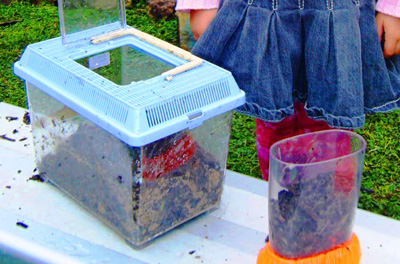 Homemade worm farm by Let the Children Play