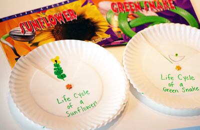 Paper plate life cycle spinners by Let's Explore