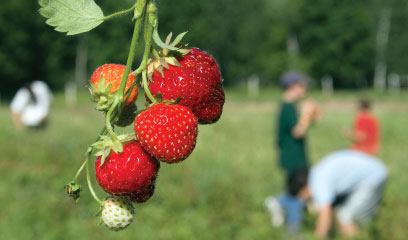 Urban foraging with kids in Seattle parks