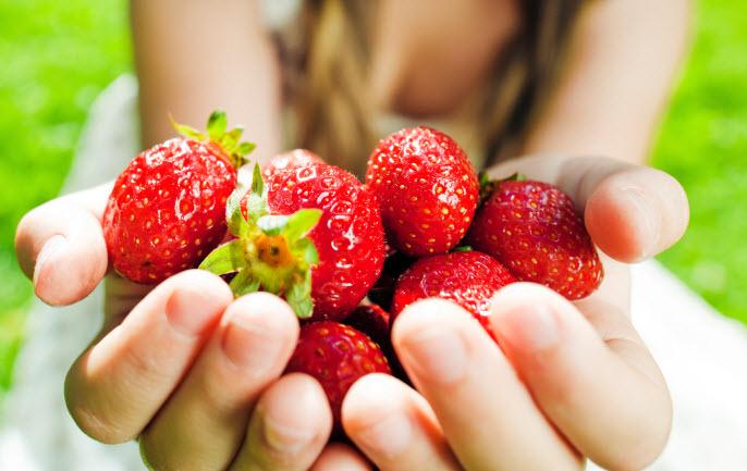 Berry Pickin Good 20 U Pick Berry Farms Around Seattle