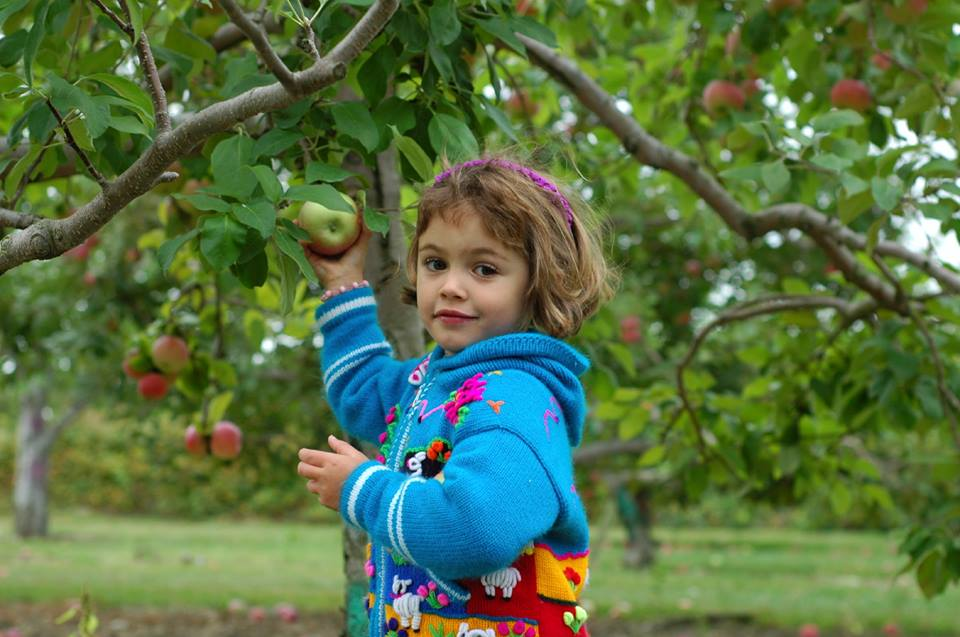 7 Places to Go Apple Picking (or Tasting) in Washington ...