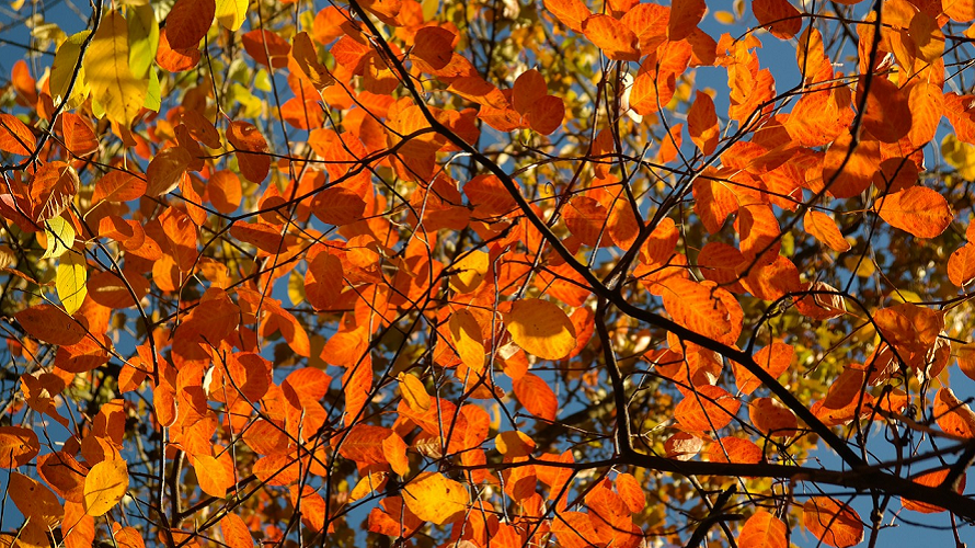 Fall Color Walks and Hikes for Families in the South Sound ...