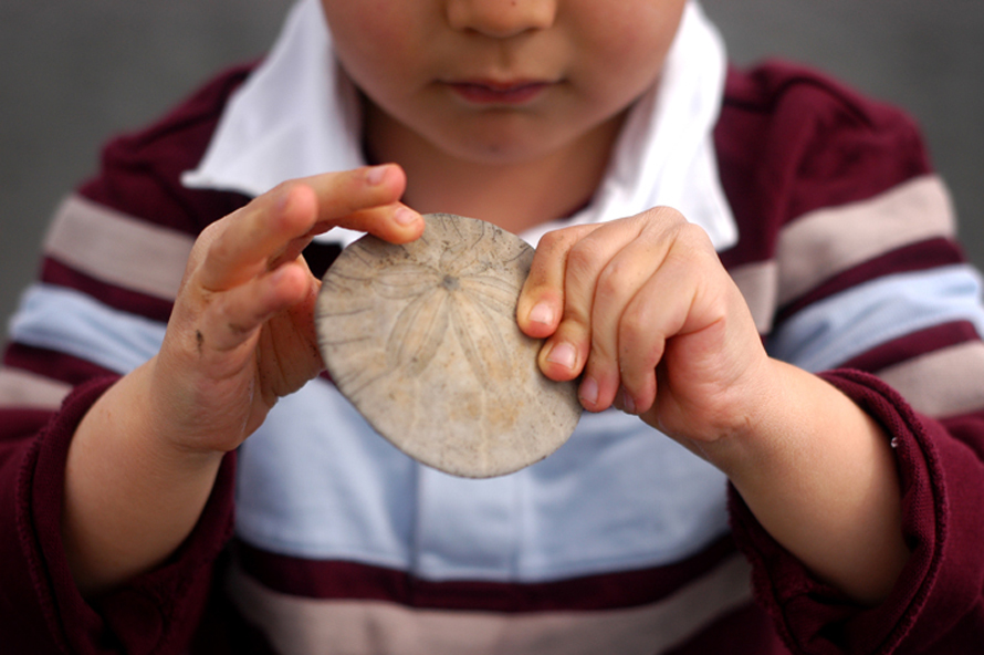seabrook sand dollar