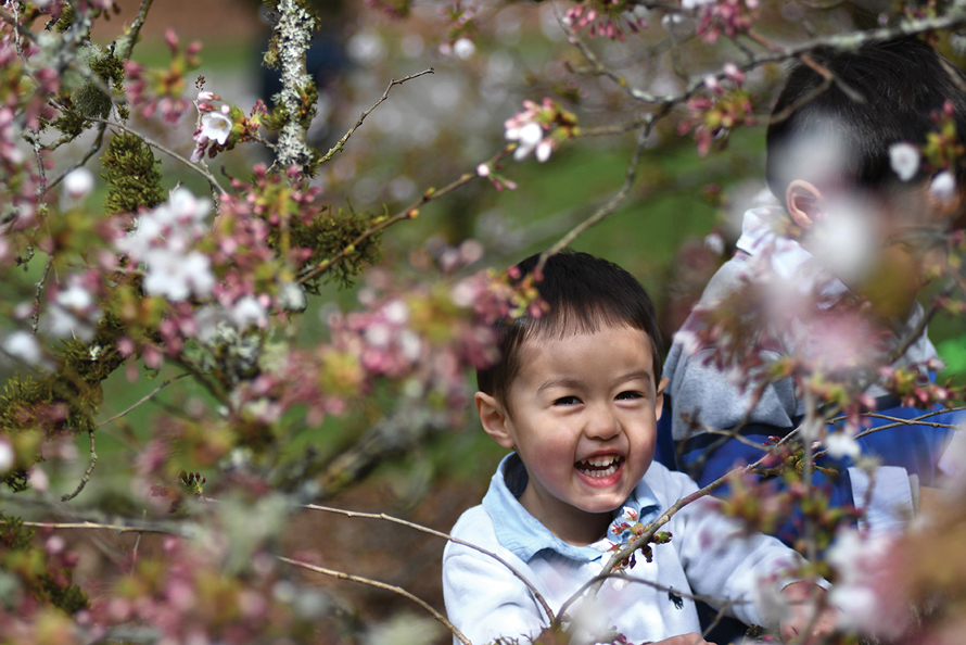 boy with cherry blossoms