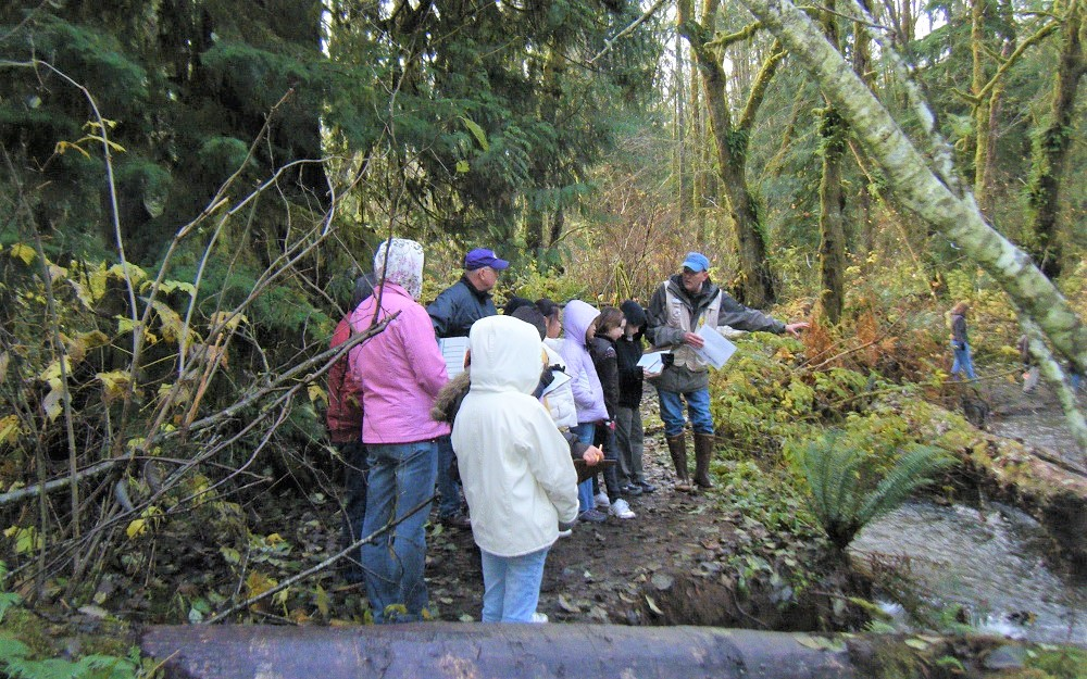 mclane creek salmon viewing Thurston County Stream Team