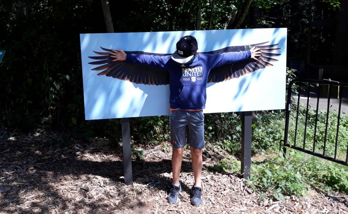 Boy checks his wing span against that of a bald eagle at Northwest trek Wild Walk