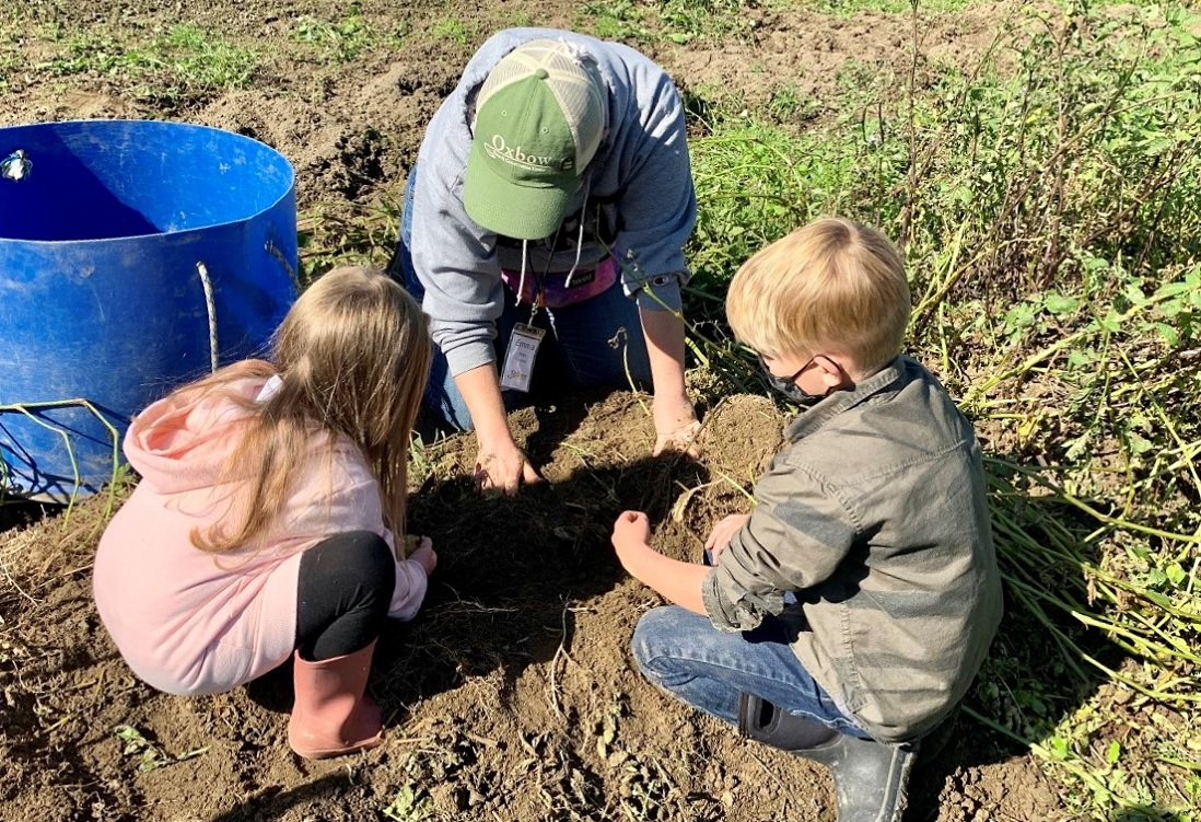 kids digging in the garden at oxbow farm and conservation center seattle area family field trip