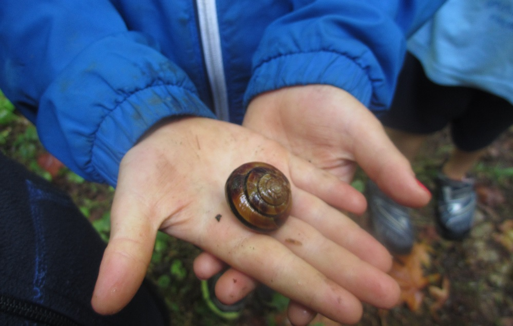 Shadow Lake snail in hand