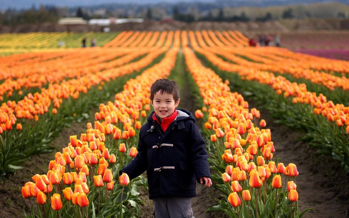 Boy posing in front of tulip fields during the 2017 Skagit Valley Tulip Festival