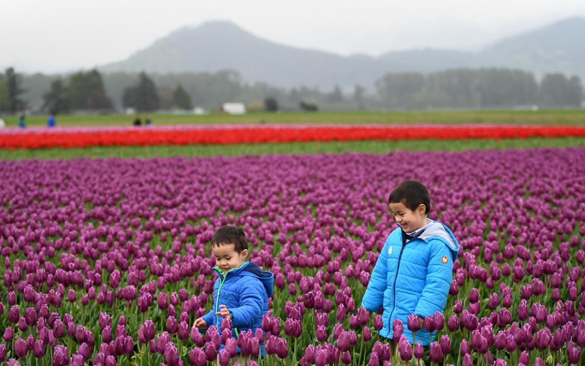 Boys in warm jackets stand among fields of beautiful tulips during the Skagit Valley Tulip Fesitval in 2018