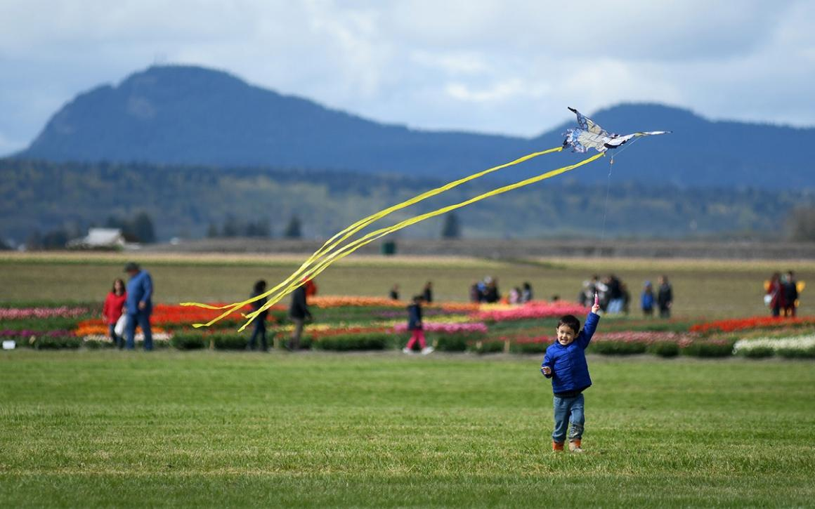 Happy young boy in a field flying at kite at Tulip Town during the 2019 Skagit Valley Tulip Festival