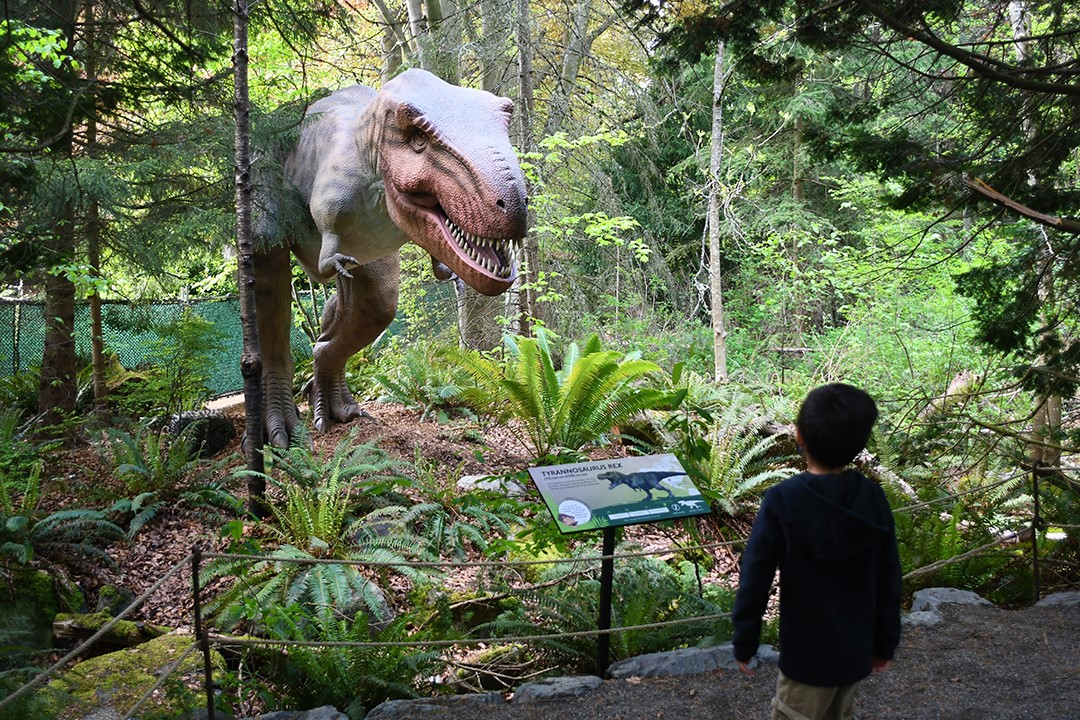 Seattle S Woodland Park Zoo Welcomes Families For Dinosaur Discovery Parentmap