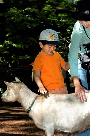 Woodland-Park-Zoo-family-farm-petting-zoo-kids-families