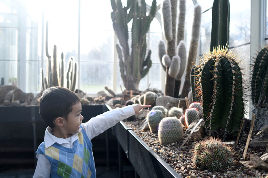 The cactus house at the Volunteer Park Conservatory. Photo credit: JiaYing Grygiel