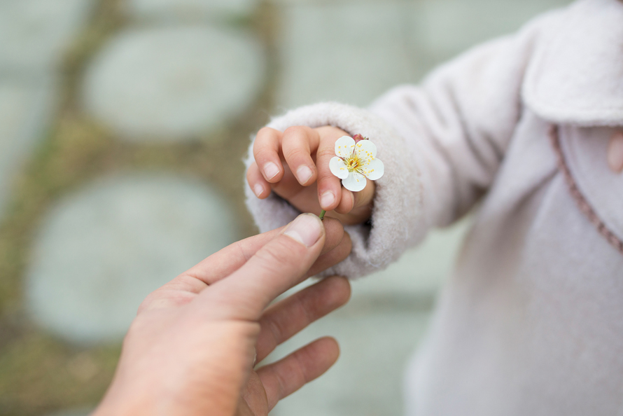 child's hand holding a cherry blossom