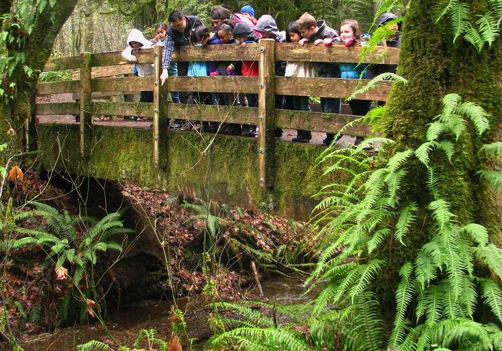 Kennedy Creek salmon viewing