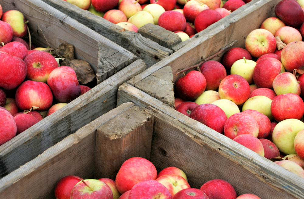 apple-cider-events-fall-families-seattle
