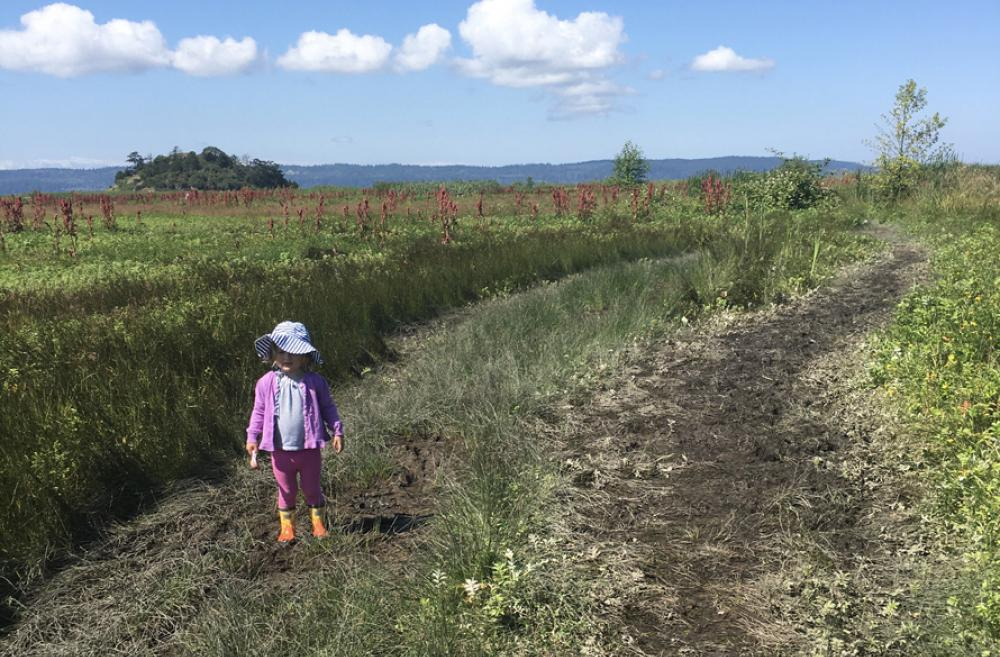 craft island kid-friendly nature walks in skagit county washington for families