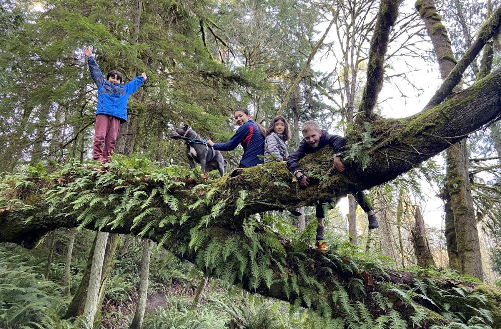 A group of children and a dog perched on a large horizontal log covered with ferns on the fairy dell trail on Bainbridge Island