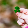 Child's hand holding four-leaf clover
