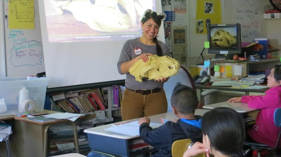Wolf Haven's talented educational staff travels around Washington state, and into Arizona, California and Oregon to give their hands-on science based presentations to groups of children and adults. Photo: Wolf Haven International