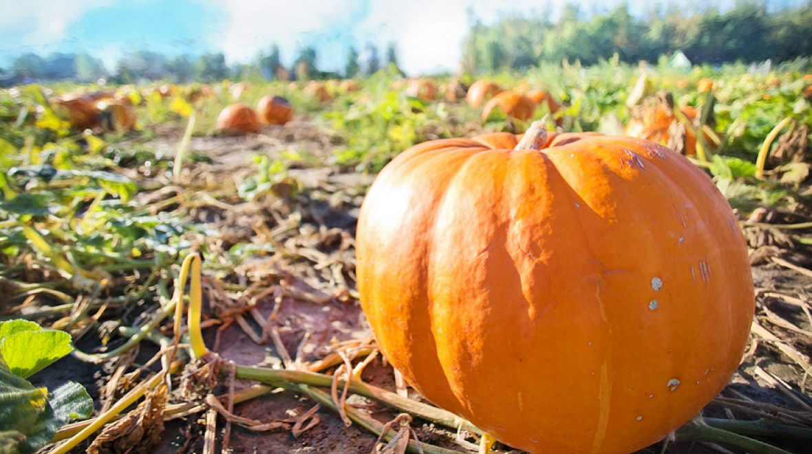 Best-pumpkin-patches-tacoma-puyallup-south-sound-area-families