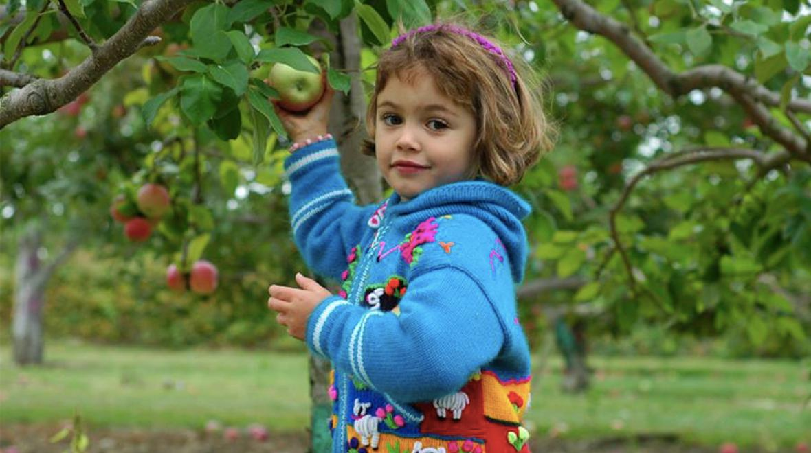 7 Places To Go Apple Picking In Washington Parentmap