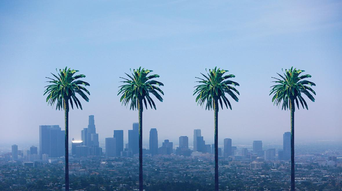 palm trees in LA