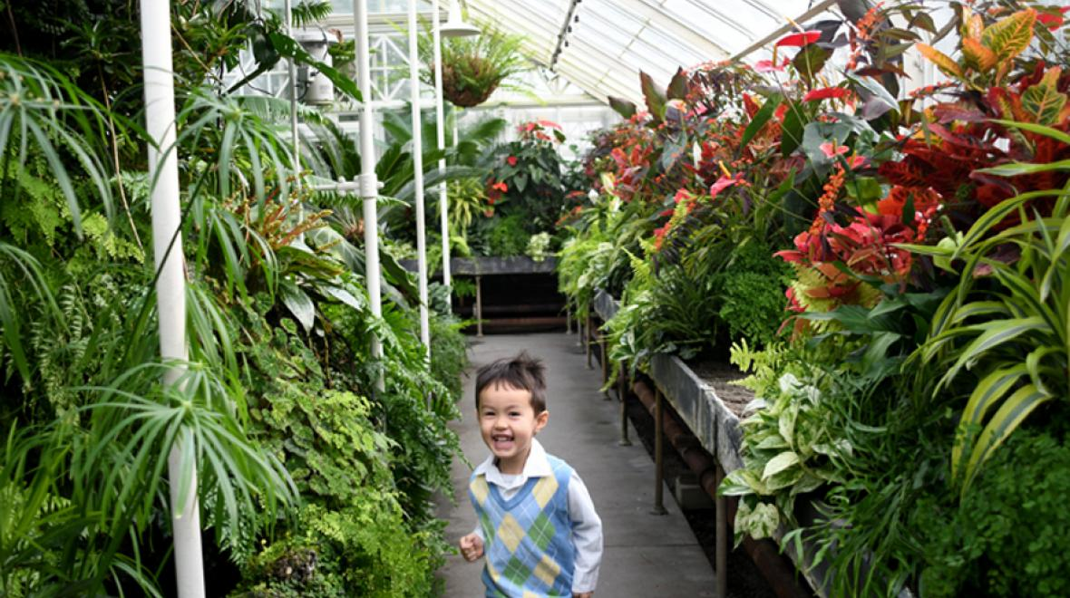 volunteer park conservatory kid in fern house