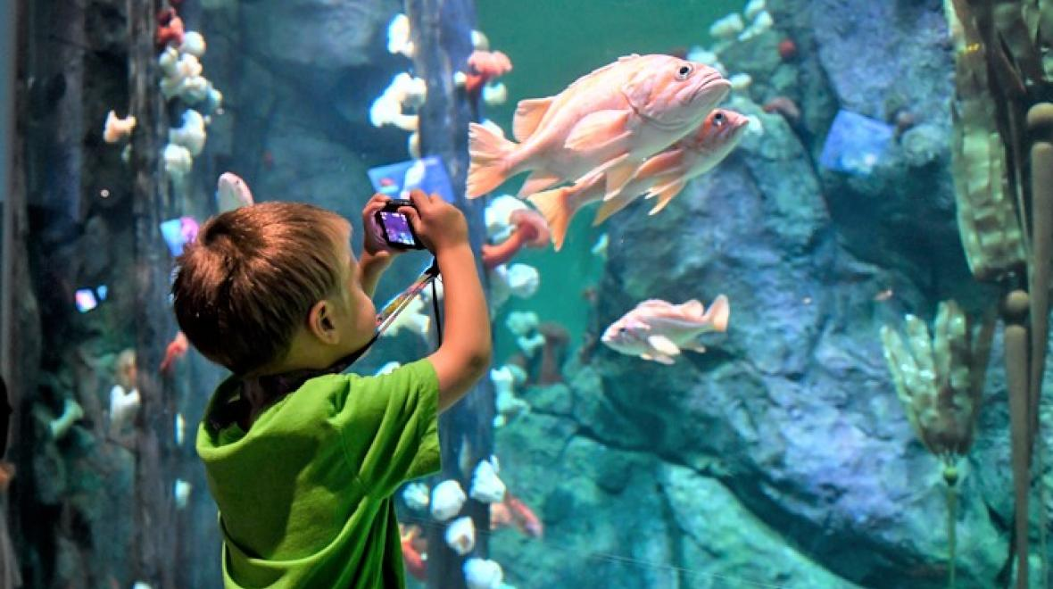 New-pacific-seas-aquarium-point-defiance-zoo-tacoma-kids-families