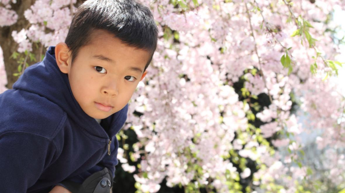 Cherry-blossoms-Seattle-area-kids-families-spring
