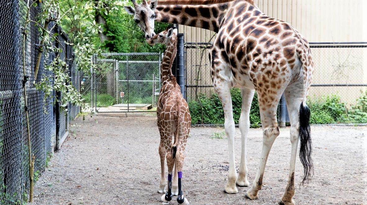 Adorable-baby-animals-must-see-Seattle-Tacoma-families