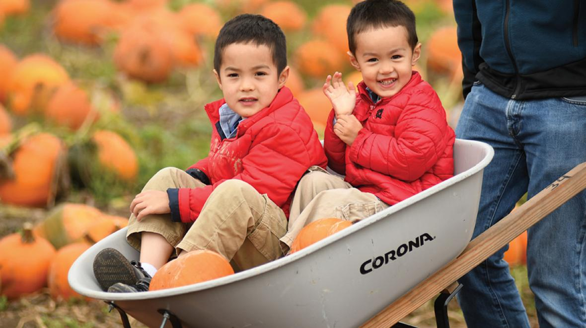 two boys in a wheelbarrow with pumpkins